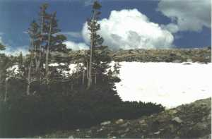 krumholtz